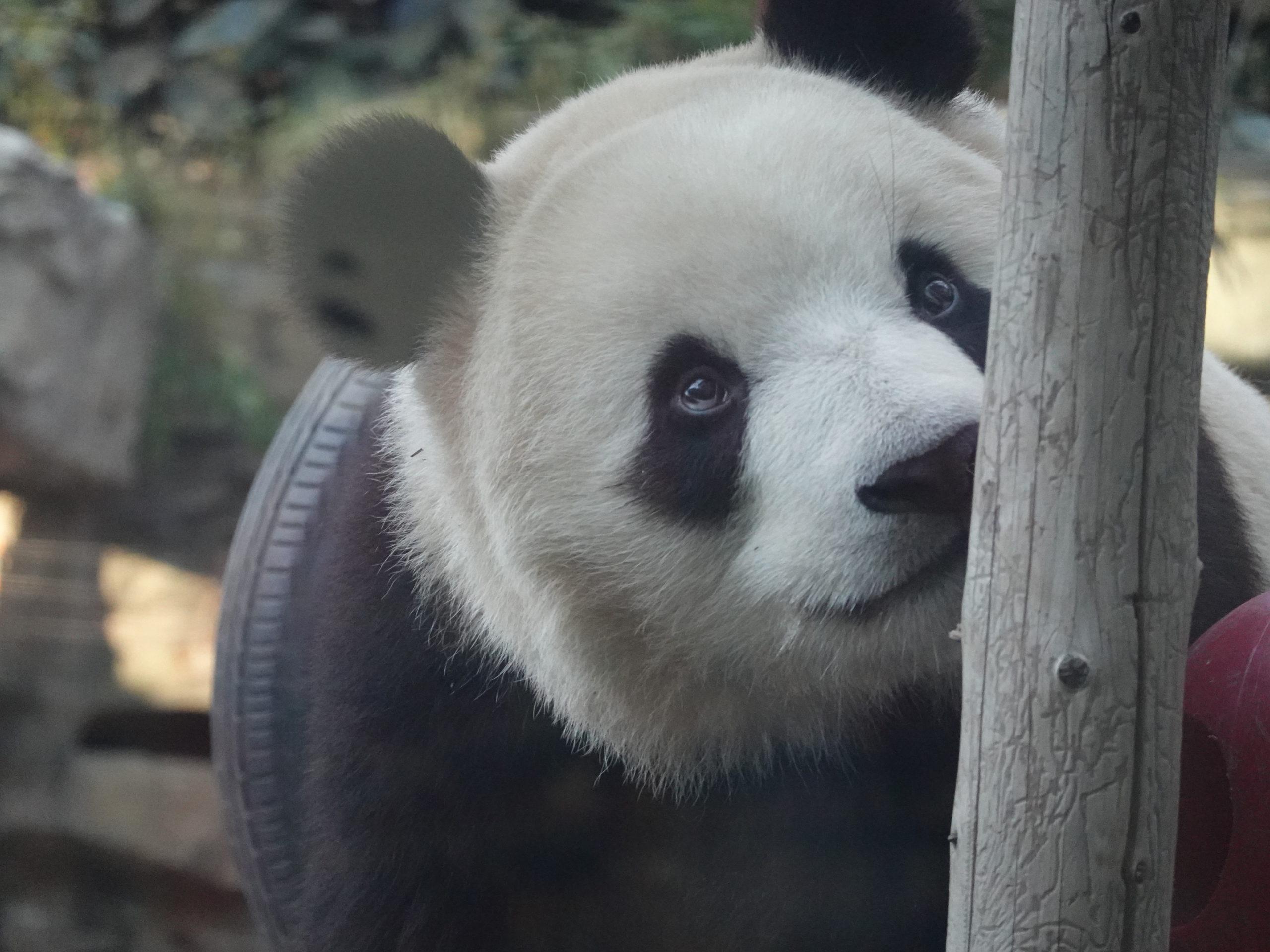 【トラピックスリピーターによるレビュ―】北京・天津4泊5日観光に行ってきたので魅力・注意点をご紹介!!